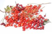 Various autumn red fruits - rowan berries, hawthorn, rose hip — Stock Photo