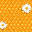 Seamless background - honeycomb and flowers of chamomile - Stock Vector
