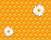 Seamless background - honeycomb and flowers of chamomile — Stok Vektör