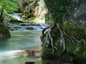 Roots and Waterfalls — Stock Photo