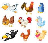 鸟类的集合 — 图库矢量图片