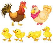 鸡家庭 — 图库矢量图片