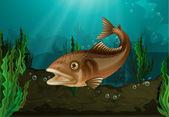 Fish underwater — Stock Vector
