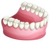 Denture — Stock Vector