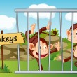 Monkeys in cage - Stock Vector