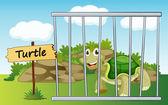 Tortoise in cage — Stock Vector