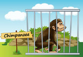 Chimpanzee in cage — Stock Vector