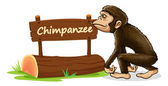 Chimpanzee and name plate — Stock Vector