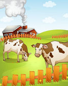 Cows — Stock Vector