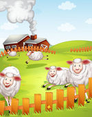 Sheeps in the farm — Stock Vector