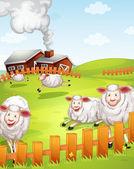 Sheeps in the farm — Stock Vector