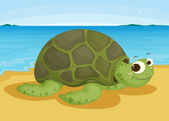 Tortoise on sea shore — Stock Vector