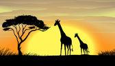 Giraffe in a beautiful nature — Stock Vector