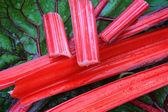 Fresh mangold — Stock Photo