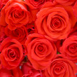 Big bunch of red roses — Stock Photo