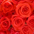 Stock Photo: Big bunch of red roses