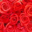Red roses — Stock Photo #11490292