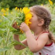 Baby smelling a big sunflower — Stock Photo