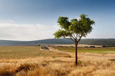Spanish central landscape — Stock Photo