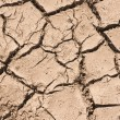 Stock Photo: Cracked Soil Pattern Background