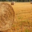 Circular Straw Bales — Stock Photo