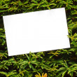 Yew tree topiary border — Stock Photo
