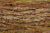 Bark bakgrund — Stockfoto