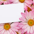 Pink Chrysanthemum bouquet with blank tag - Stock Photo
