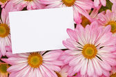 Pink Chrysanthemum bouquet with blank tag — Stock Photo