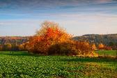 Autumn colours — Stock Photo