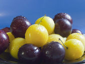 Yellow and black plums — Stock Photo