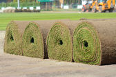 Fresh rolled-up grass turf — Stock Photo