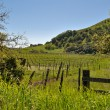 Beautiful Vineyard in Napa Valley — Foto de Stock