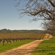 Multiple Trees framing Beautiful Vineyard — Stock Photo
