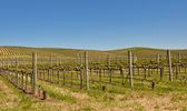 Beautiful Vineyard in Napa Valley — Stock fotografie