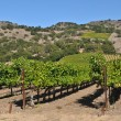 Stock Photo: NapValley Winery in California