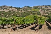 Napa Valley Winery in California — Stock Photo