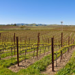 Napa Valley Vineyard — Stock Photo #11063233