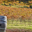 Wine Barrel in Fall — Stock Photo