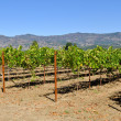 NapValley CaliforniVineyard Travel Destination — Stock Photo #11065789
