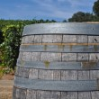 Wine Barrel in Vineyard — Stock Photo