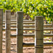 Grapevine in Spring — Stockfoto #11065976
