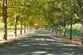 Aleja drzew w letni dzień — Zdjęcie stockowe