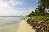 Caribbean Beach in Ambergris Caye, Belize — Stock Photo