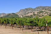 Napa Valley California Vineyard — Stock Photo