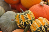 Thanksgiving Pumpkins and Gourds — Stock Photo