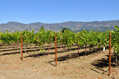 Napa Valley California Vineyard Travel Destination — Stock Photo