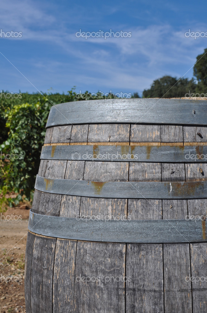Wine Barrel in Vineyard  Stock Photo #11065817