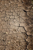 Cracked Dirt Background — Stock Photo