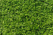 Fake Grass used on sports fields for soccer, baseball, golf and — ストック写真